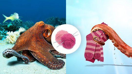 knitting octopus